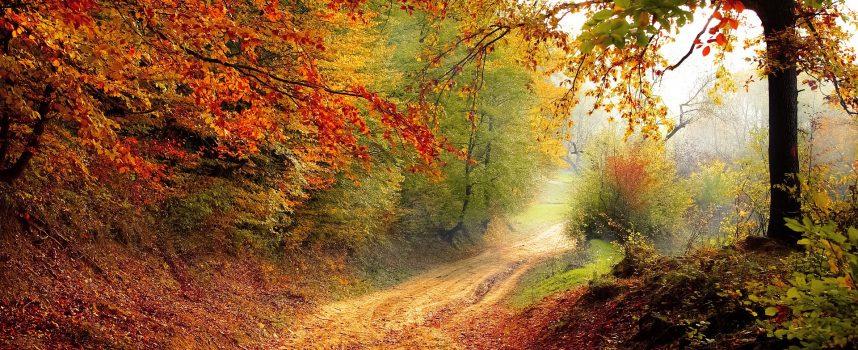 Leśmianowska kraina poezji