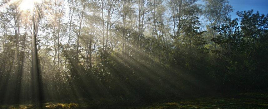 THE NATURAL WORLD – świat przyrody