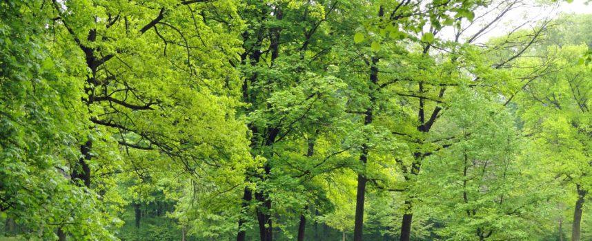 WORLD OF PLANTS – świat roślin