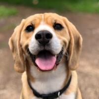 Sucha karma dla psa – zalety i wady