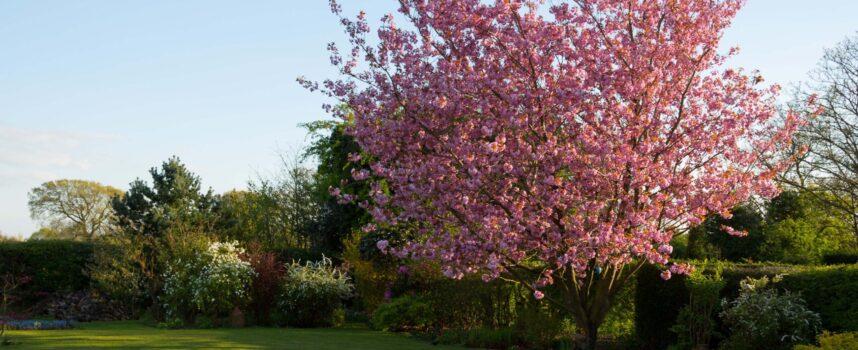 Zestaw ogrodowy. Wybierz odpowiedni do Twojego ogrodu